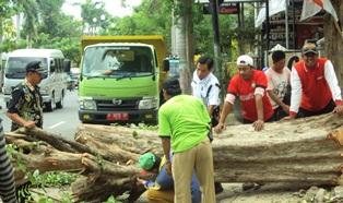 Petugas DKP Tebang Pohon
