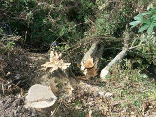 Tebang Pohon Tak Berijin, Satu Korban Meninggal Disantuni