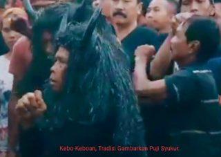Ritual Kebo-keboan Tradisi Yang Semakin Meriah