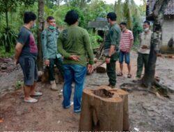 Waka ADM KPH Banyuwangi Selatan Pimpin Operasi Gabungan, Kayu Jati Gelondongan Diamankan