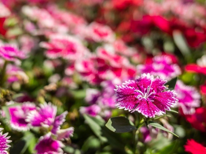 Tak Hanya Indah, 5 Bunga Ini Juga Punya Filosofi yang Menarik!