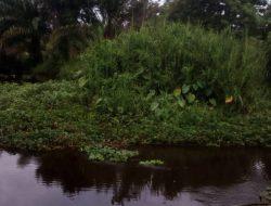 Warga Resah, Aliran Sungai Bubon Terganggu Tumpukan Rumput