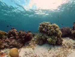 Teluk Banyu Biru atau Selanggrong dengan Pesona Bawah Lautnya yang Memukau