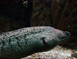 Mengunjungi Technopark Budidaya Ikan Sidat Terbaik di Dunia yang Ada di Banyuwangi