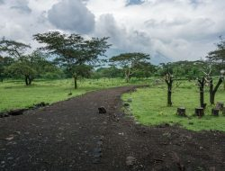 Mengunjungi Mini Afrika di Taman Nasional Baluran yang Berada di Ujung Timur Pulau Jawa